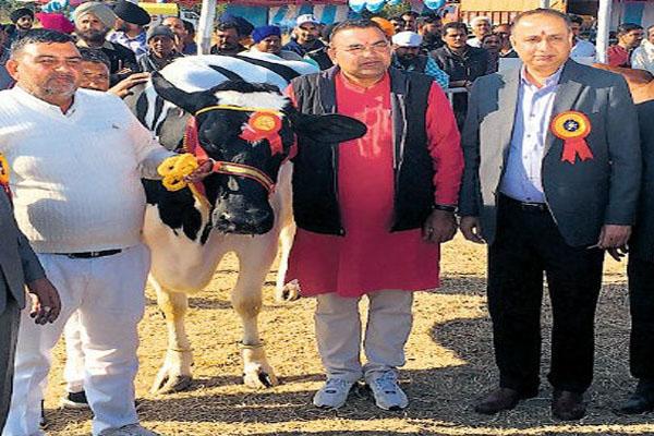 આ ગાય દરરોજ આપે છે 53 લિટર દૂધ, તેના ભાવ જાણીને રહી જશો દંગ