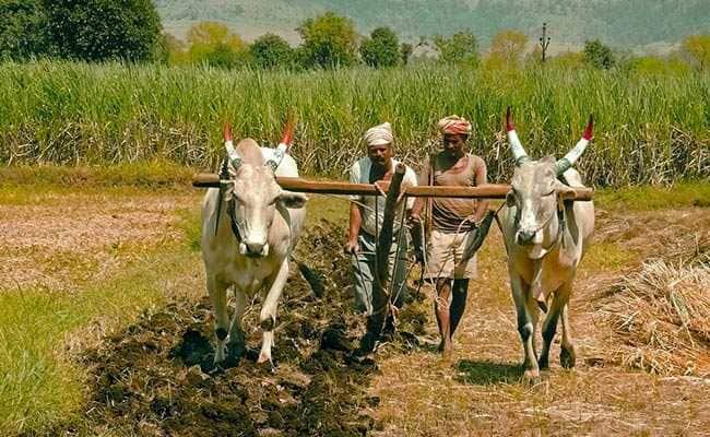 રાજ્યના અંદાજે ૫૩ લાખથી વધુ ખેડૂતો માટે મુખ્યમંત્રી રૂપાણીનો મહત્વનો નિર્ણય