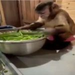વાંદરાએ લીધી જોરુ કા ગુલામ બનવાની ટ્રેનિંગ, વિડીયો જોઈને તમે પણ ચોંકી જશો